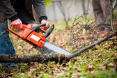 Man with gasoline powered chainsaw cutting fire wood from trees — Stock Photo