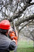 Adult cutting trees with chainsaw and tools — Stock Photo
