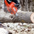 Agricultural activities - Man cutting trees with chainsaw and tools in the garden during winter — Stock Photo