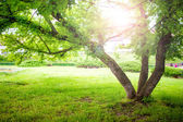 Beautiful summer landscape with a tree and sun rays in park. Tranquil background or wallpaper scenery with nature in park — Stock Photo