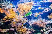 Levendige kleurrijke koraal kolonie rif en tropische vissen in de Oceaan — Stockfoto