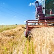 Industrial vintage harvesting machinery in wheat crops. Rural agriculture and farming with vintage machines — Stock Photo #51176345