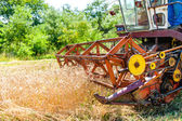 Process of harvesting with combine, gathering mature grain crops from fields — Stock Photo
