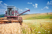 Industrial harvesting process with a specialized combine harvesting crops of wheat and grain — 图库照片