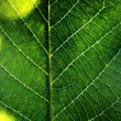 Macro leaf — Stock Photo