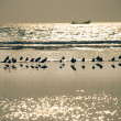 Stock Photo: Small birds on beach at sunset