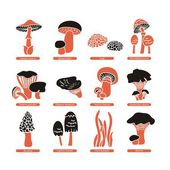 Edible Mushrooms Set — Wektor stockowy