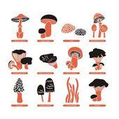 Zestaw grzybów jadalnych — Wektor stockowy