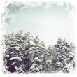Winter Forest of  fir trees  — Stock Photo