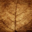 Постер, плакат: Faded brown leaf veins