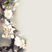 Tree apple — Stock Photo