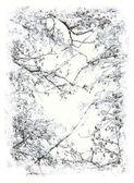 Franjeado ramas de los árboles con nieve — Foto de Stock