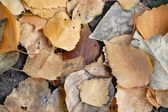 Brown leaves texture — Stock Photo