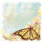 Swallowtail butterfly on flowers — Stock Photo