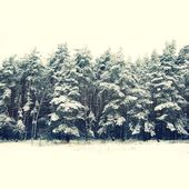 Winter eve trees under snow for Christmas background — Stock Photo