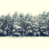 Winter vooravond bomen onder de sneeuw voor kerstmis achtergrond — Stockfoto