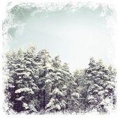 Forêt d'hiver de sapins — Photo