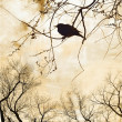 Silhouette of robin on bare tree - Stock Photo