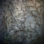 сухой виноград — Стоковое фото