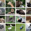 Animals collage — Stock fotografie