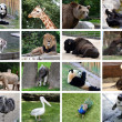Tiere-collage — Stockfoto