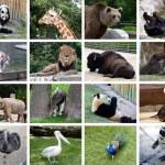 colagem de animais — Foto Stock