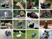 Animals collage — Stock Photo