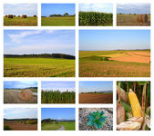 Rural landscapes collage — Stock Photo