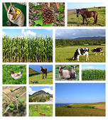 Collage of rural landscapes — Stock Photo