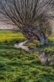 Old tree next to a stream — Stock Photo