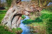 Old tree over stream — Stock Photo