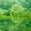 Fresh green tree reflected in water — Stock Photo #27595157