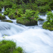 Stock Photo: Stream in green forest