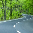 Stock Photo: Road in green forest