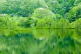 Fresh green tree reflected in water — Stock Photo