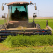 Combine harvester cutting a field of Alfalfa — Stock Photo