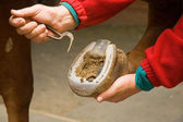 Horse Shoe Cleaning — Stock Photo