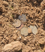 Coins on brown earth — Stock Photo