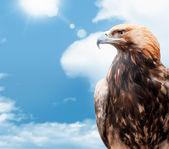 Adler am himmel hintergrund — Stockfoto