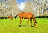 The horses — Stock Photo