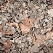 Dead leaves for backgrounds and textures - Stock Photo