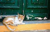 Katze liegend auf einem alten grünen tür — Stockfoto