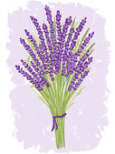 Illustration of lavender bouquet — Stock Vector
