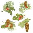 Illustration of evergreen branches with cones and berries — Imagens vectoriais em stock