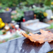 Autumn leaf and tombs with flowers at cemetery — Stock Photo
