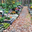 Tombs and leaves on path at cemetery — Stockfoto