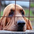 Sad dog behind bars — Foto Stock