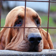 Sad dog behind bars — Stock Photo