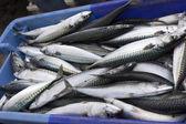 Pescare sul mercato — Foto Stock