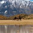 Stock Photo: Buddhist Pilgrims Horses Lake Mountain Dhankar